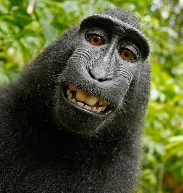 You cheeky monkey!
